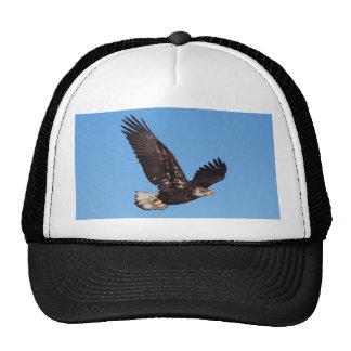 Bald Eagle Mesh Hat