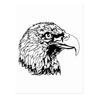 Bald Eagle Head Illustration Post Card