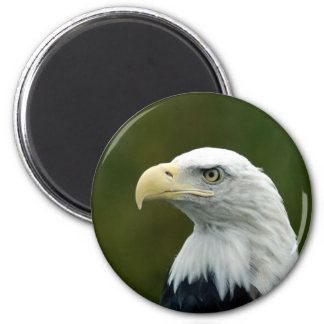 Bald Eagle head magnet