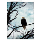 Bald Eagle in a Tree With Blue Sky and Clouds Card