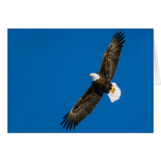 Bald Eagle In Clear Blue Sky Card