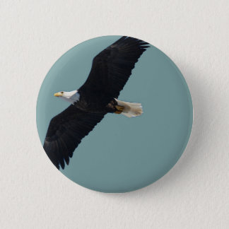 bald eagle in flight 6 cm round badge