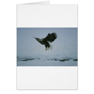 bald eagle in flight card