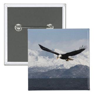 Bald Eagle in Flight, Haliaeetus leucocephalus, 15 Cm Square Badge