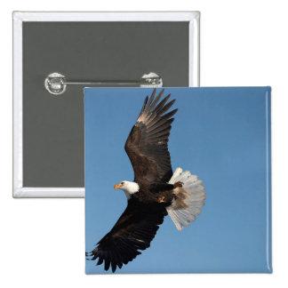 Bald Eagle in Flight, Haliaeetus leucocephalus, 2 Button