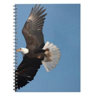 Bald Eagle in Flight, Haliaeetus leucocephalus, 2 Notebook