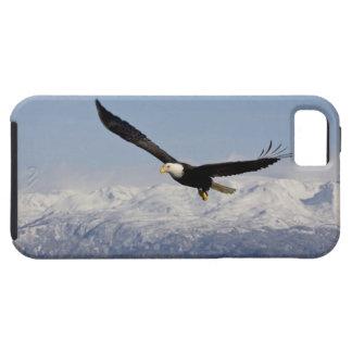 Bald Eagle in Flight, Haliaeetus leucocephalus, 3 iPhone 5 Cover