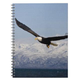 Bald Eagle in Flight, Haliaeetus leucocephalus, 3 Notebook