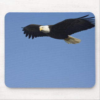 Bald Eagle in Flight, Haliaeetus leucocephalus, 4 Mouse Mat