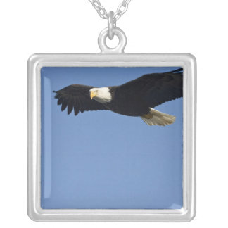Bald Eagle in Flight, Haliaeetus leucocephalus, 4 Silver Plated Necklace