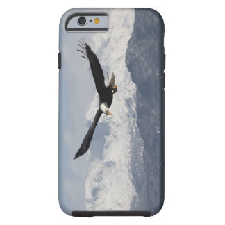 Bald Eagle in Flight, Haliaeetus leucocephalus, Tough iPhone 6 Case