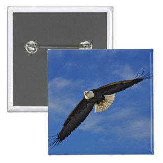 Bald Eagle in flight, Haliaetus leucocephalus, 15 Cm Square Badge