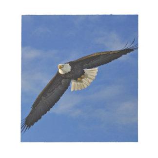 Bald Eagle in flight, Haliaetus leucocephalus, Notepad