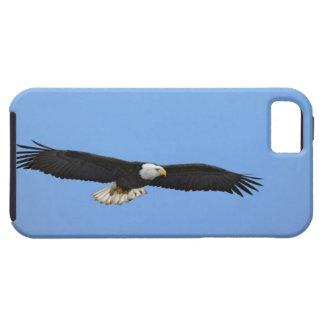 Bald Eagle in flight, Homer, Alaska, Haliaetus iPhone 5 Cases
