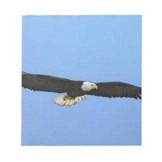 Bald Eagle in flight, Homer, Alaska, Haliaetus Notepad