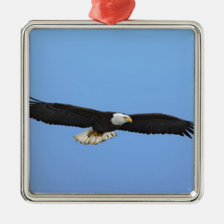 Bald Eagle in flight, Homer, Alaska, Haliaetus Silver-Colored Square Decoration