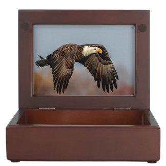 Bald Eagle in flight Keepsake Box