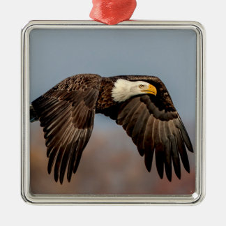 Bald Eagle in flight Silver-Colored Square Decoration