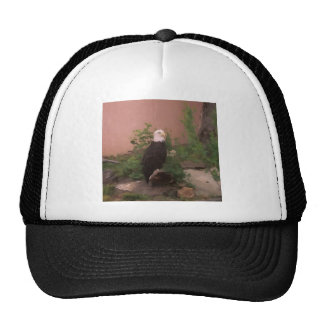Bald Eagle in Paint Hat