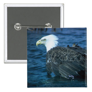 Bald Eagle in Water 15 Cm Square Badge