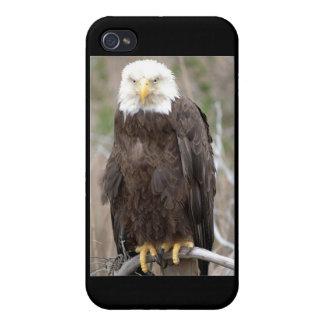 Bald Eagle iPhone 4 Cover