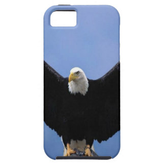 Bald Eagle iPhone 5 Cover