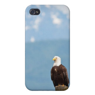 Bald Eagle iPhone 4/4S Cases