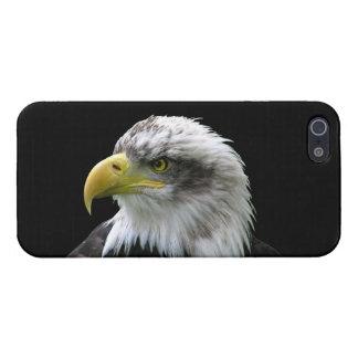 Bald Eagle iPhone 5 Cases