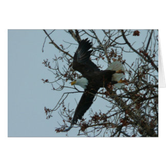 Bald Eagle Launch Greeting Card