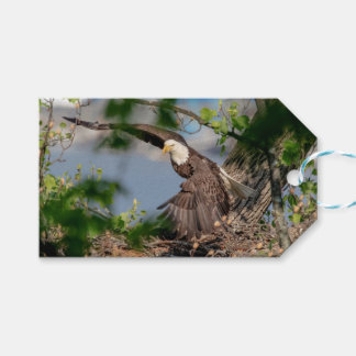 Bald Eagle leaving the nest Gift Tags
