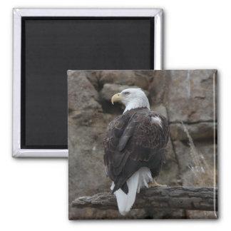 Bald Eagle Square Magnet
