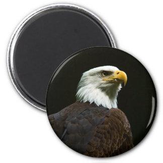 Bald Eagle Magnets