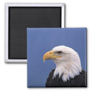 Bald Eagle Refrigerator Magnets