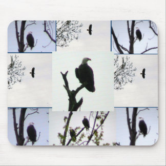 Bald eagle Montage Mouse Mat