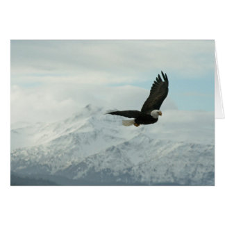 Bald eagle & mountains card