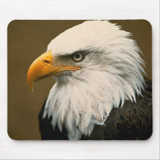 bald eagle mouse mat