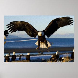 Bald Eagle ocean poster