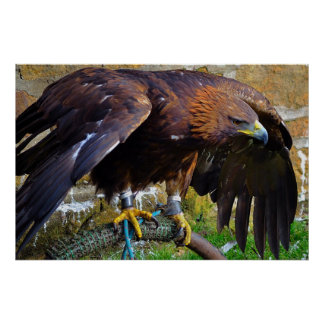 Bald Eagle On A Rope poster