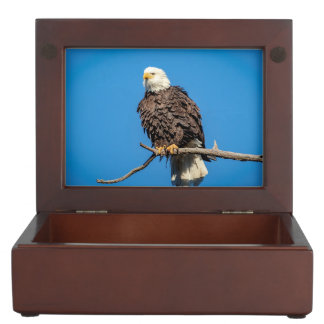 Bald Eagle on a tree branch Keepsake Box