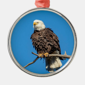 Bald Eagle on a tree branch Silver-Colored Round Decoration