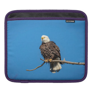 Bald Eagle on a tree branch Sleeve For iPads