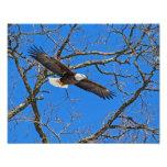 Bald Eagle On Blue Photo Art