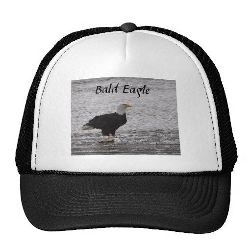Bald Eagle on Salmon Hat