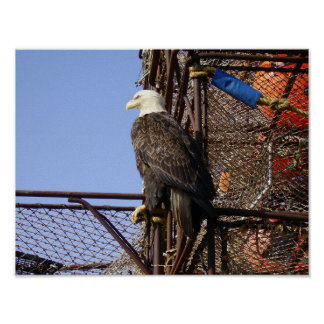Bald eagle on Stacked Crabpots Poster