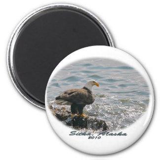 Bald Eagle on the Beach Magnet