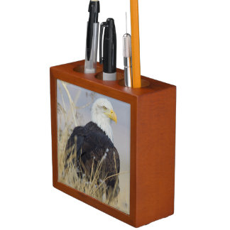 Bald Eagle on the ground Pencil/Pen Holder