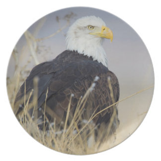 Bald Eagle on the ground Plate