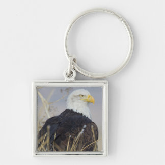 Bald Eagle on the ground Silver-Colored Square Key Ring