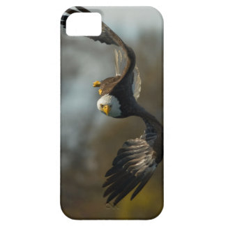Bald Eagle on the Hunt iPhone 5 Cases