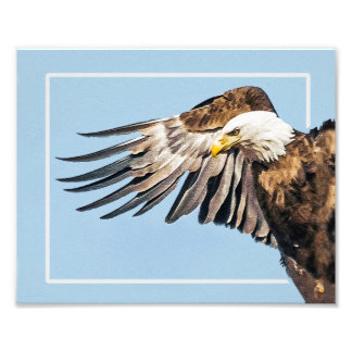 Bald Eagle on the Wing Photographic Print